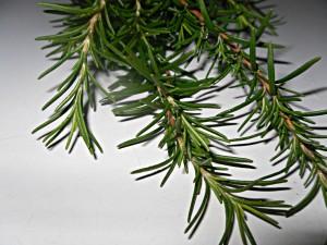 rosemary aromatherapy oil