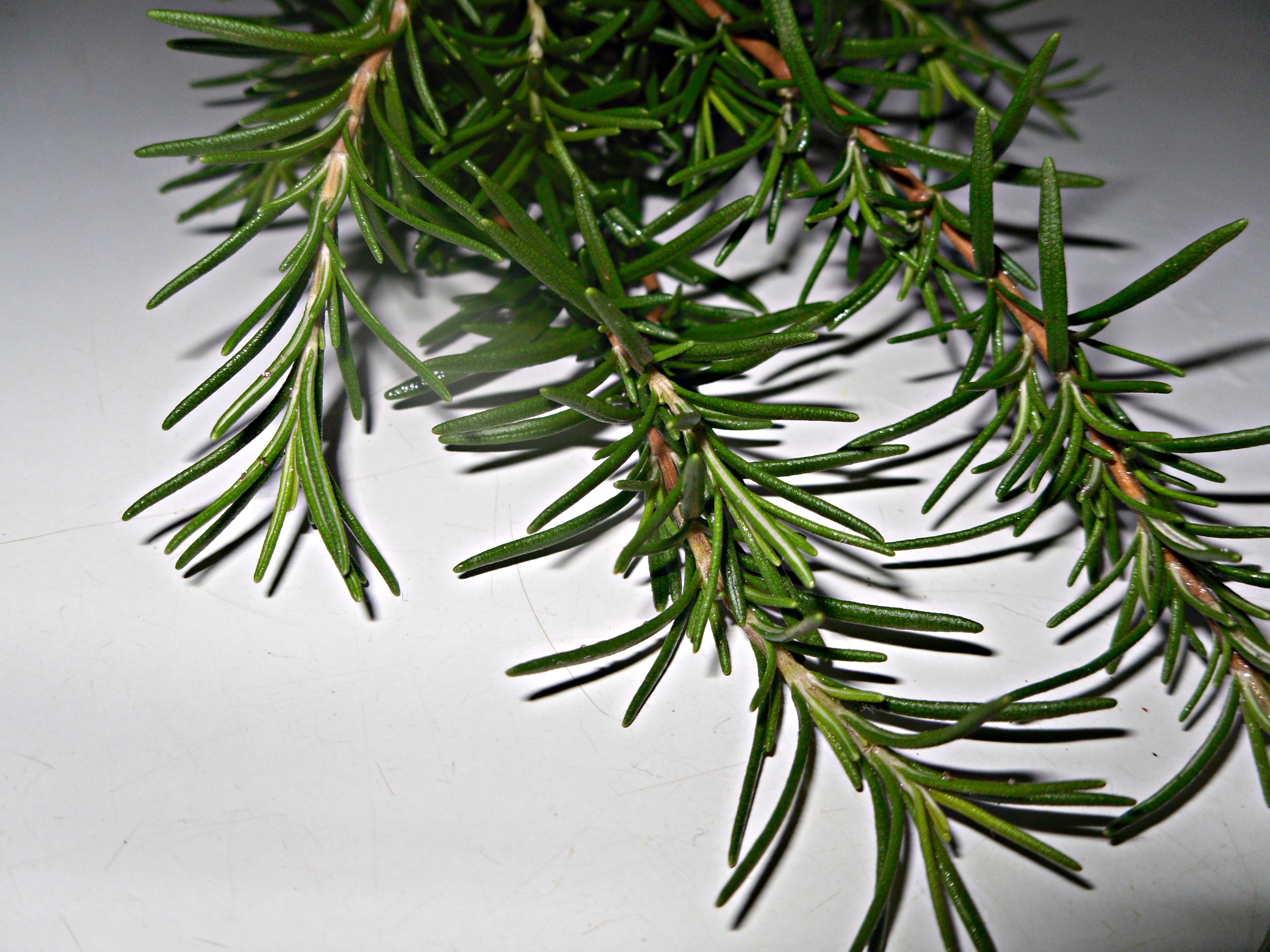 Ask An Aromatherapist: Rosemary Essential Oil Safety