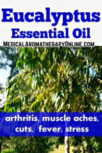 Eucalyptus essential oil is used in aromatherapy to treat arthritis, muscle aches, cuts, fever and stress.