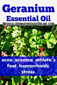 Geranium essential oil is used in aromatherapy to treat acne, eczema, athlete's foot, hemorrhoids and stress.